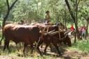 """Festa tradicional """"Carros de Bois"""""""